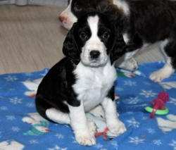 Brigitta poses @ 7 weeks of age