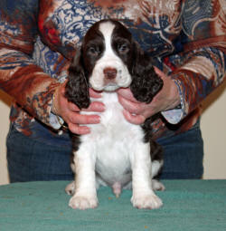 Georg sits & poses for the camera; 6 weeks of age
