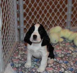 Maria @ 6 weeks of age